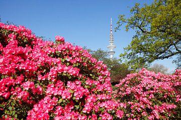 Japanischer Garten mit Fernsehturm und Rhododendronblüte, Hamburg, Deutschland, Europa i