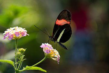 Schmetterling von Elma Nengerman