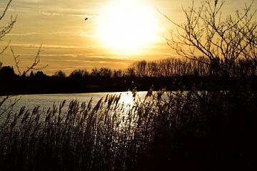 Zonsondergang met vogel van Marcel Ethner