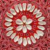 Bloemenmandala Tulip van Margreet Ubels thumbnail