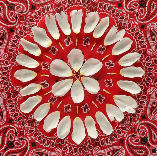 Bloemenmandala Tulip van Margreet Ubels