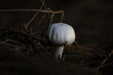 Ee paddestoel in het donkere bos van Pim van der Horst