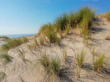 Moving dunes van Thomas Hofman