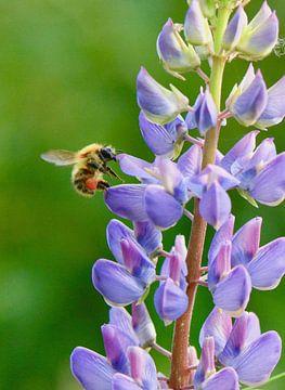 paarse bloem met snoepende bij von Mieke Verkennis