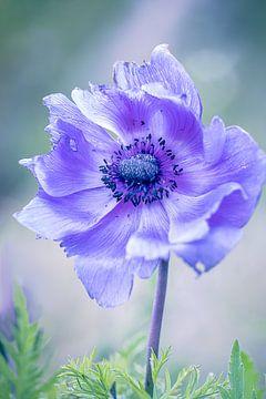 Lila Flower Power von natascha verbij