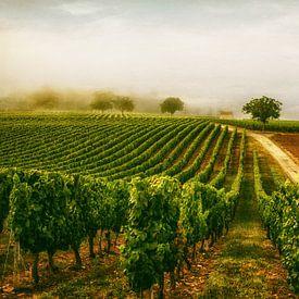 Le vignoble sur Lars van de Goor
