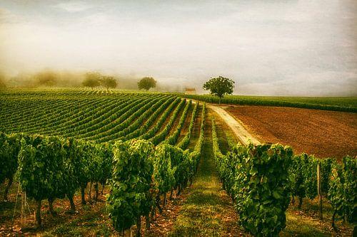 De wijngaard van Lars van de Goor