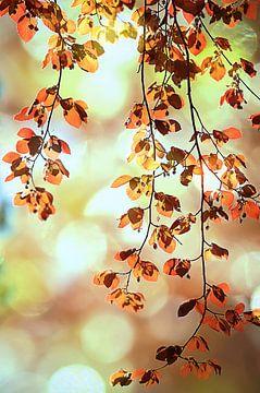 leaves van zwergl 0611