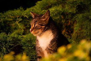 Kat geniet van ondergaande zon van FotoGraaG Hanneke