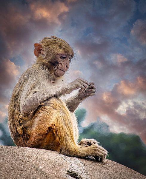 Concentratie.  Aapje bij de Pashupatinath tempel, Kathmandu van Rietje Bulthuis