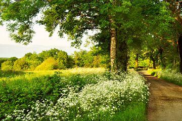 Landweg met  bomen en Fluitekruid  van Corinne Welp