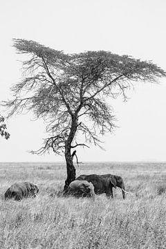 Elefant baum von Bart Hendriks