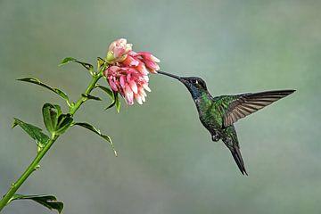Kolibri von Els Peelman