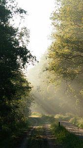 Lichtstralen op de vroege morgen van Sander Huizinga