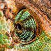 Chameleon eye. sur Rob Smit Aperçu