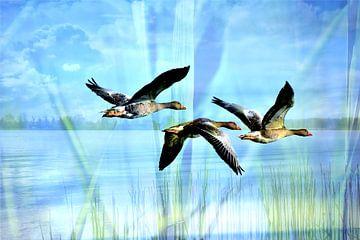 Ganzen boven water van Susan Dekker
