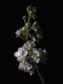 Low Key Flowers sur Tim Abeln