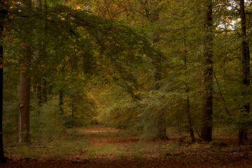 Veluwe Wälder von Marcha Bos Fotografie