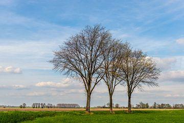 Drie nog kale bomen in een rij van Ruud Morijn