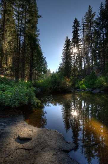 In het bos van de Sierra Nevadas