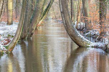 Stämme von Baumen entlang Bach im Wald mit Schnee im Winter von Ben Schonewille