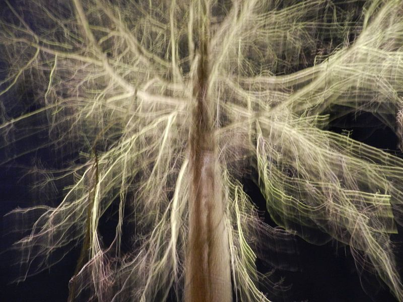 Tree of light von Charlotte Koopman