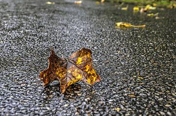 Herfstblad op nat asfalt van Frans Blok
