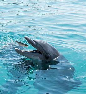 Delphin fängt einen Fisch