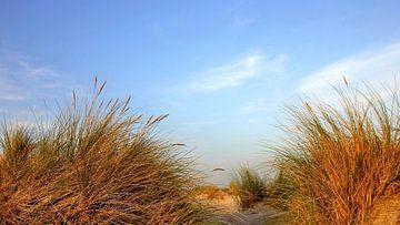 Herbstdünenpanorama van Ostsee Bilder