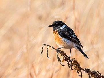 Kleine vrolijke vogel van Rob Smit