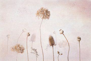 Getrocknete Blumen, Stilleben von Joske Kempink