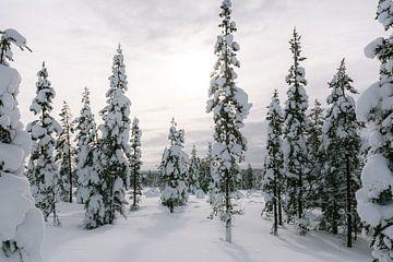 Verschneite Fichte in Finnisch-Lappland || Polarkreis, Finnland von Suzanne Spijkers