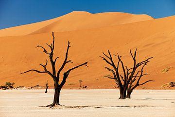 Deadvlei mit toten Bäumen, Wüstenlandschaft der Namib von Jürgen Ritterbach