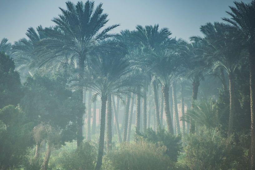 Palmbomen bos in Egypte van Jille Zuidema