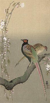 Fasanenpaar und Kirschblüten, Ohara Koson - ca. 1900