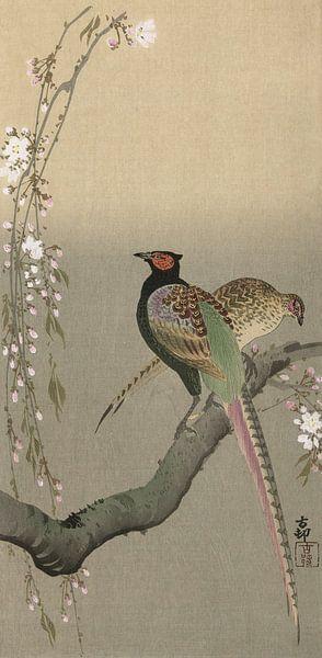 Fasanenpaar und Kirschblüten, Ohara Koson - ca. 1900 von Het Archief