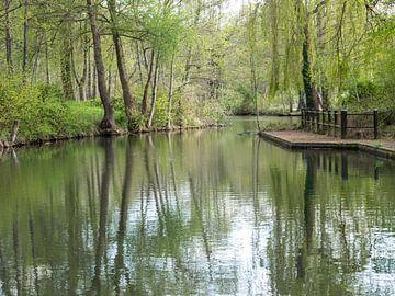 Landschap van het Spreewald in Brandenburg van Animaflora PicsStock
