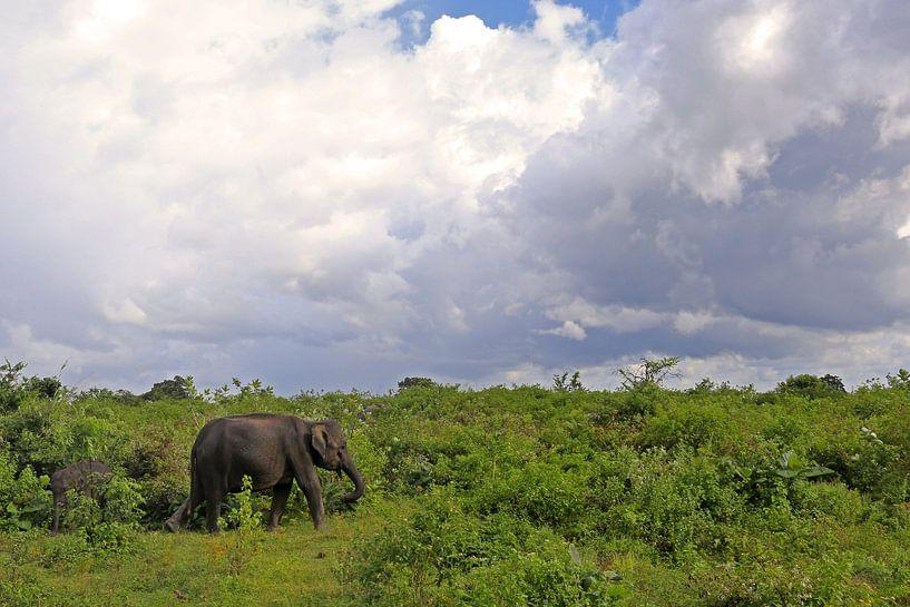 Olifant in het Udawalawe N.P. in Sri Lanka van Antwan Janssen