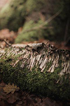 Opgekrulde boomschors van Nanda van der Eijk