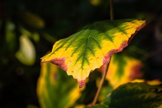 Autumn Foliage Colors van William Mevissen