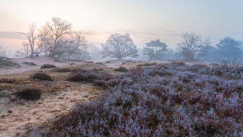 Zeegser Duinen in de mist en rijp op de heide