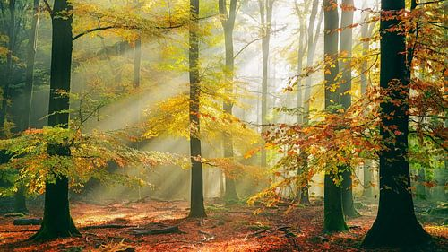 sinfonia della foresta van Lars van de Goor