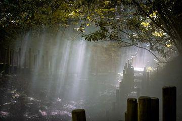Zonnestralen van Catharina Bee