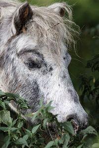 Pony im Gras van Rolf Pötsch