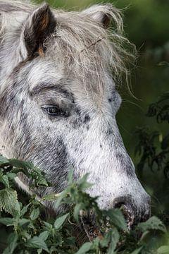 Pony im Gras von Rolf Pötsch