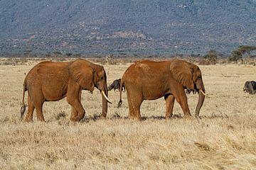 Deux éléphants dans les plaines d'Afrique