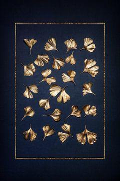 Gingko Blätter von Steffen Gierok