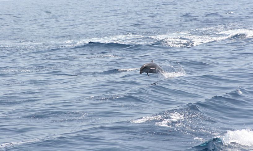 royal delfin van Rick Nijman