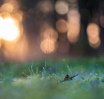 grassprietjes in het bos van Tania Perneel