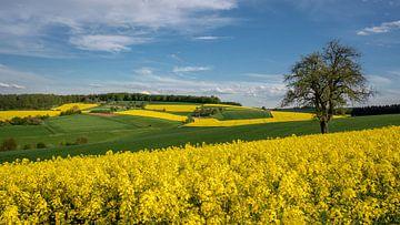 Landbouwwoestijn van Uwe Ulrich Grün